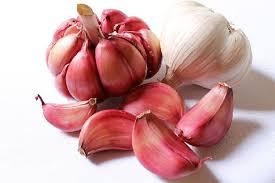 L'aglio – medicina antica e attuale